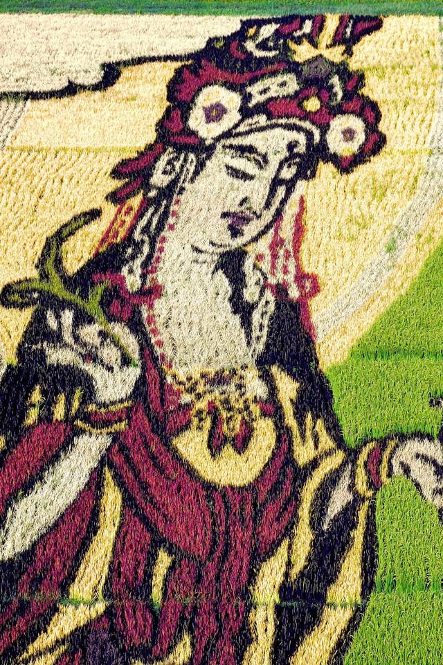 Một cái nhìn cận cảnh nghệ thuật trên ruộng lúa.
