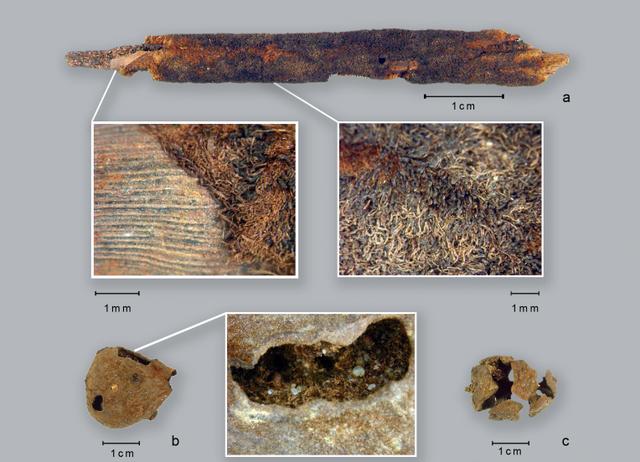 Giới khảo cổ học phát hiện các loại ngũ cốc, rau củ quả chiếm phần lớn trong khẩu phần ăn của người cổ đại sống ở sa mạc Sahara.