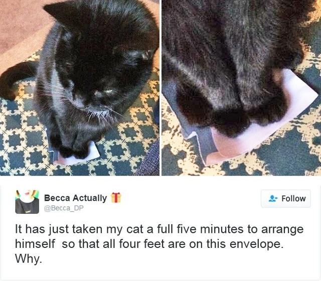Con mèo của tôi phải loay hoay tới 5 phút để cho cả 4 cái chân vừa trên phong bì. Tại sao?