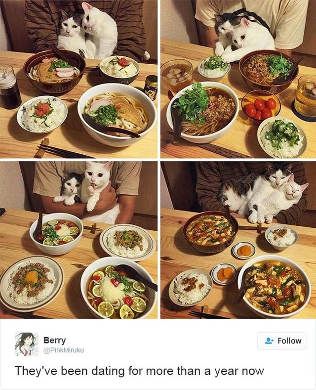 15 con mèo đã khiến mạng xã hội chao đảo trong năm 2016 - Ảnh 25.