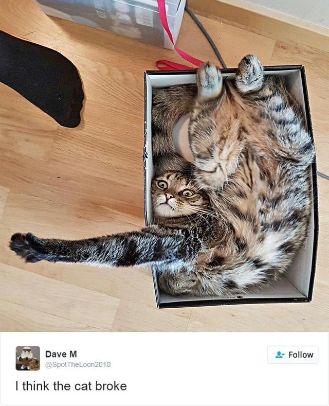 15 con mèo đã khiến mạng xã hội chao đảo trong năm 2016 - Ảnh 27.
