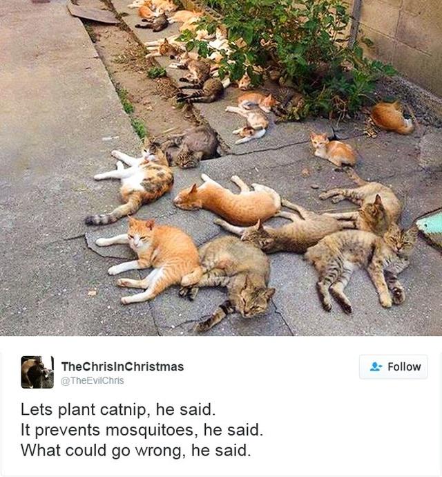 15 con mèo đã khiến mạng xã hội chao đảo trong năm 2016 - Ảnh 9.