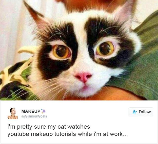 15 con mèo đã khiến mạng xã hội chao đảo trong năm 2016 - Ảnh 15.