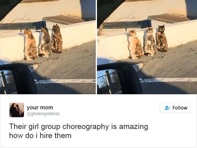 15 con mèo đã khiến mạng xã hội chao đảo trong năm 2016 - Ảnh 17.