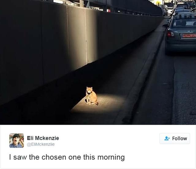 15 con mèo đã khiến mạng xã hội chao đảo trong năm 2016 - Ảnh 19.