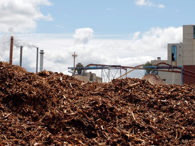 Các sinh chất như cành hay ngọn cây bị đốn hạ sẽ được cho vào đốt để sản sinh ra điện năng (Ảnh chụp tại nhà máy Old Town Fuel and Fiber)