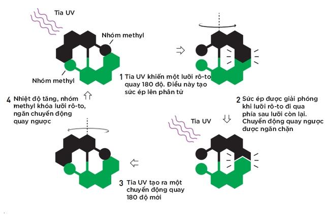 Feringa và nhóm nghiên cứu của ông có thể tạo ra một động cơ phân tử quay 12 triệu vòng mỗi giây