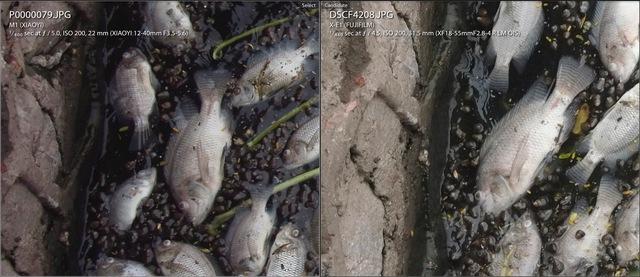 Tuy nhiên, lợi thế lớn nhất của nó lại nằm ở độ chi tiết của bức ảnh. Hãy chú ý vào vách đá và phần vây của con cá.