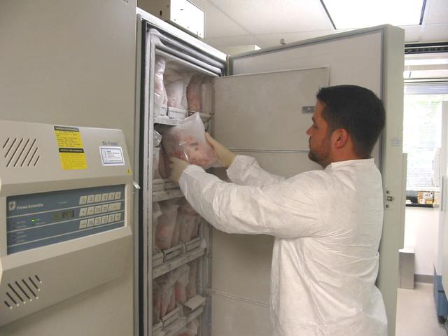Lưu trữ đông lạnh mô não. Các lát cắt não được bọc kín trong một túi nhựa. dán nhãn, đánh số và được lưu trữ trong tủ lạnh ở nhiệt độ -80 độ C.