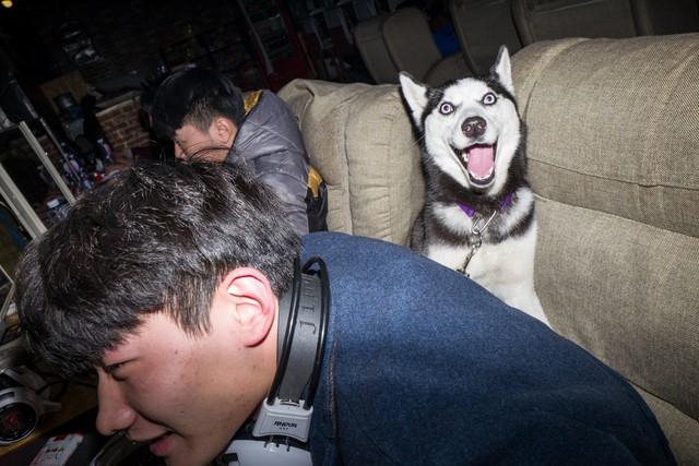Một số game thủ mang theo cả chó cưng