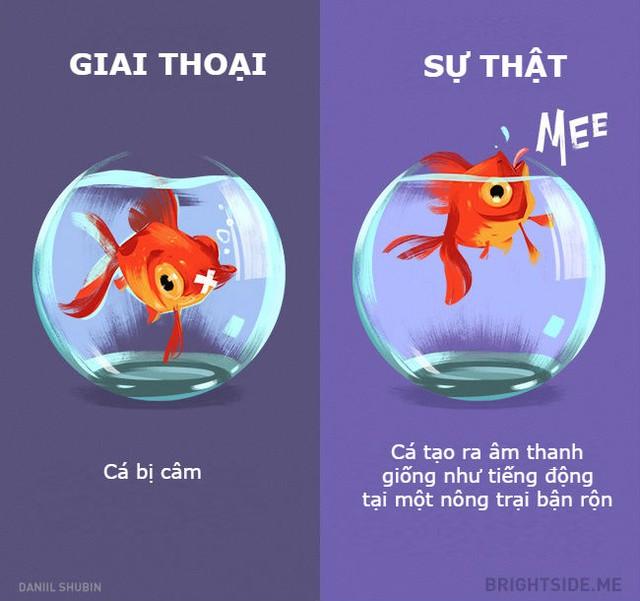 Làm thế nào để nghe được lũ cá vàng nói chuyện với nhau những gì?
