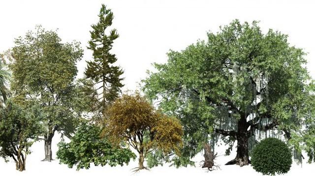 Những cái cây là một phần quan trọng làm nên sự thành công của game và phim ảnh