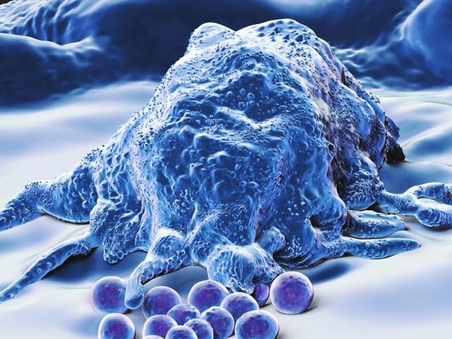Nghiên cứu năm 2016 từng chứng minh đại thực bào là một tác nhân hỗ trợ HIV tồn tại