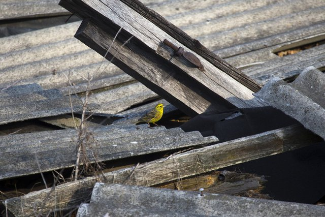 Chim chiếm một phần lớn trong số những động vật hoang dã xung quanh Chernobyl.