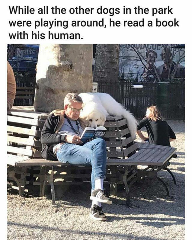 Trong khi các chú chó khác mải mê chơi đùa với nhau, chú chó này lại ra đọc sách với người