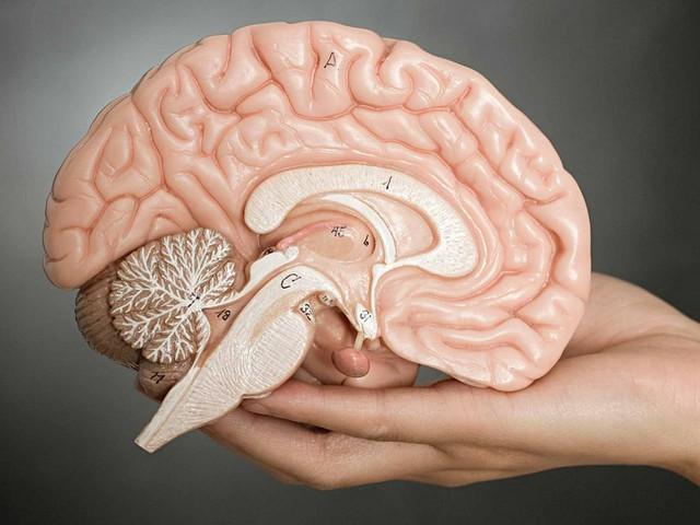 Các nhà khoa học nghi ngờ bấy lâu họ đã hiểu sai não bộ