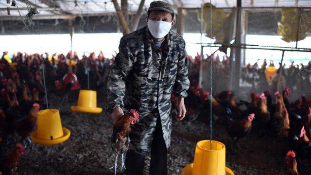 Hàng nghìn tấn colistin mỗi năm được dùng trong chăn nuôi ở Trung Quốc, sẽ được chuyển hướng tiêu thụ sang thị trường Đông Nam Á?