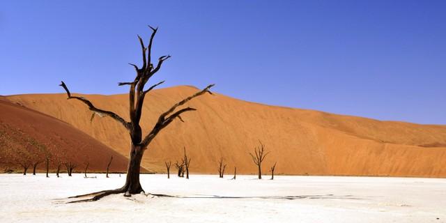 """Deadvlei hay còn gọi là """"nghĩa địa cây khô"""" ở Namibia là một vùng đất """"chết chóc"""" kỳ lạ với hàng trăm cây keo chết khô nhìn như những bộ xương người nổi trên đụn cát trắng."""