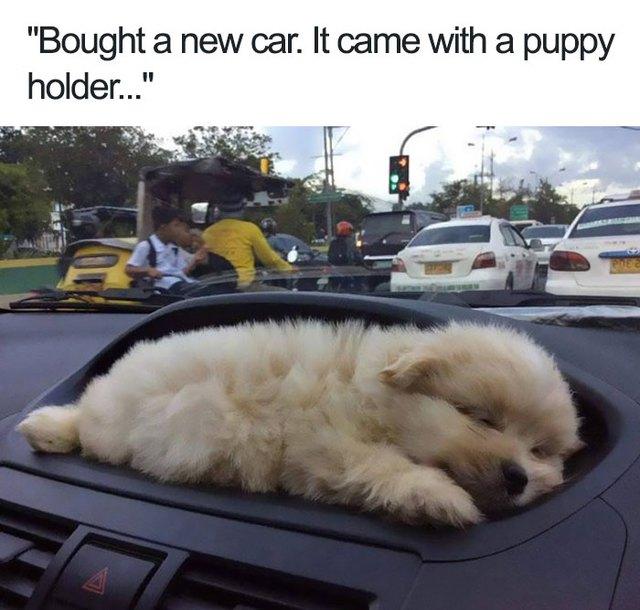 Mua xe hơi mới, không ngờ lại có chỗ đựng chó