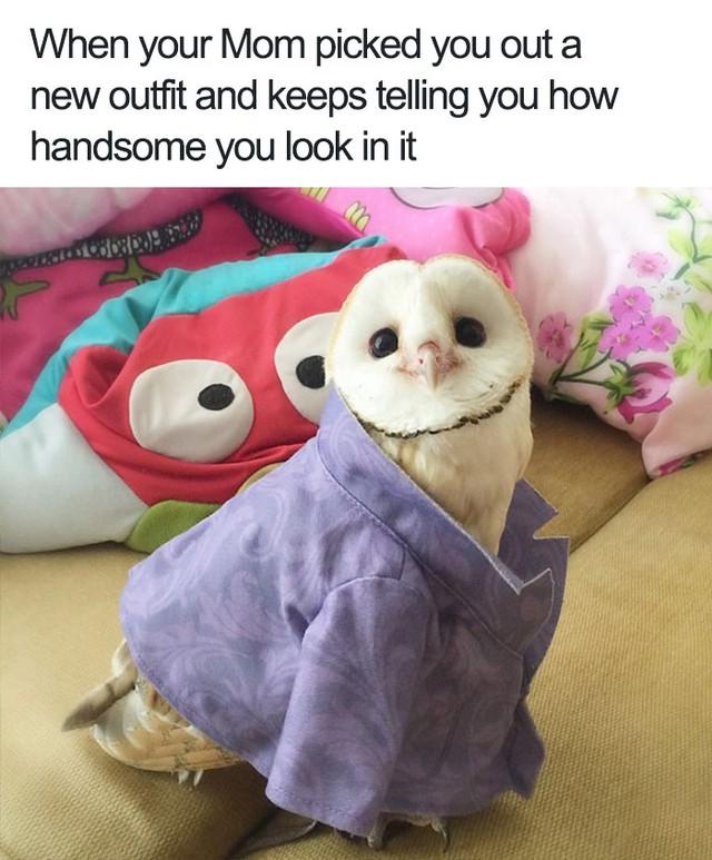Khi mẹ mua cho bạn một bộ quần áo mới và luôn miệng khen bạn đẹp trai khi mặc chúng