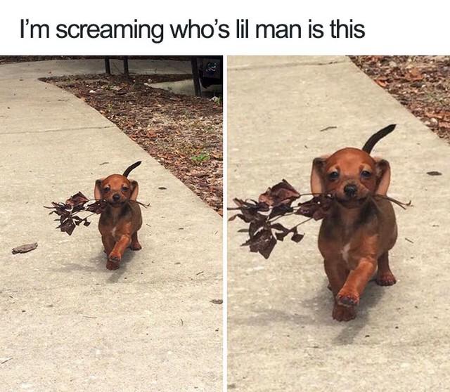 Leonardo Dicaprio walking phiên bản chó...