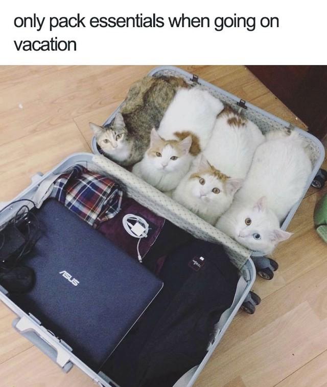 Không cần mang nhiều, đi du lịch chỉ cần những thứ cần thiết nhất thôi