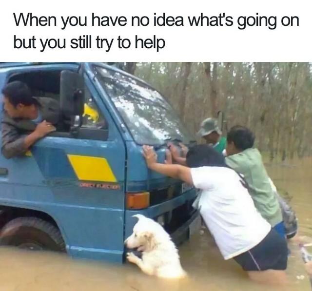 Bạn chẳng hiểu chuyện gì xảy ra nhưng vẫn cố gắng giúp đỡ mọi người