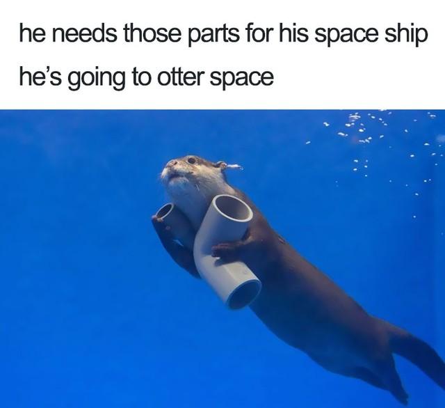 Em đang lắp phi thuyền để bay về hành tinh rái cá...