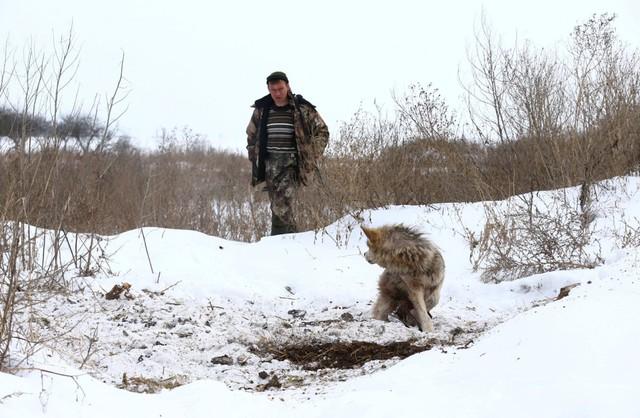 Trong năm 2016, có khoảng 1.700 con sói đã bị săn bắn và giết hại.