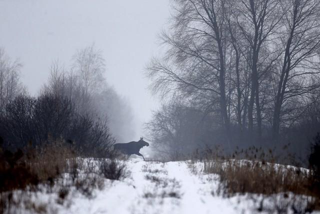 Rất nhiều động vật đang tận dụng lợi thế của việc không có cuộc sống của con người quanh đây.