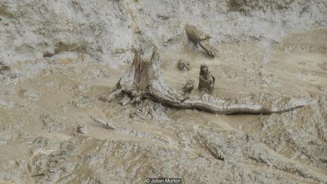 Một gốc cây cổ thụ hiện ra khi lớp băng tan