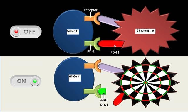 Phương pháp trị liệu ung thư bằng anti-PD-1