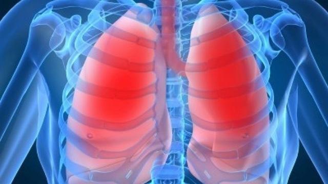 Phổi không chỉ giúp chúng ta hô hấp, nó còn tạo máu