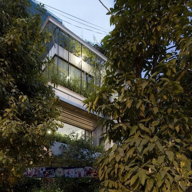 Cây xuất hiện ở khắp mọi nơi: từ vỉa hè, sân, tường nhà và trên sân thượng