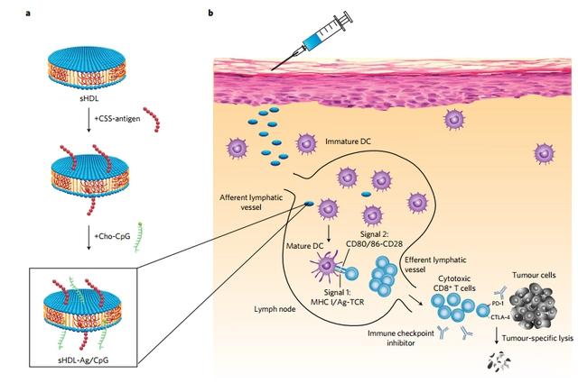 Các đĩa nano chứa kháng nguyên đặc hiệu (neoantigens)