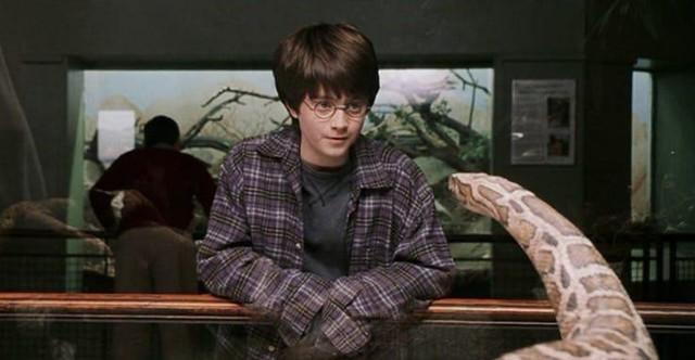 20 điều vô nghĩa mà chả mấy ai biết về bộ ba nhân vật chính của Harry Potter (P.1) - Ảnh 2.