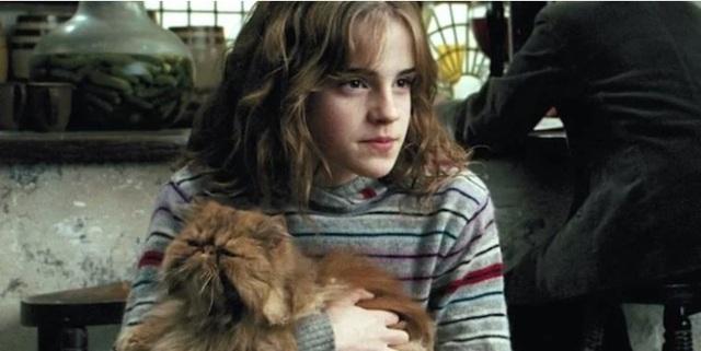 Harry Potter: Hộp Ăn vặt Giả bệnh và 10 thứ tuyệt vời nhất bạn nên mua tại Hẻm Xéo - Ảnh 4.