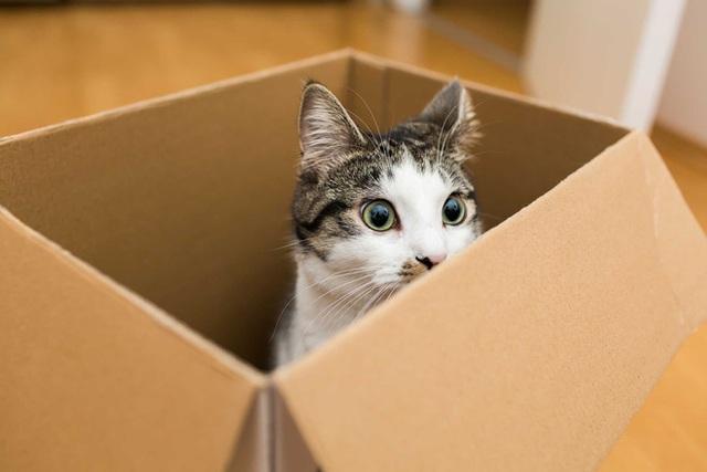 Khoa học giải thích: Tại sao lũ mèo thích hộp? - Ảnh 3.