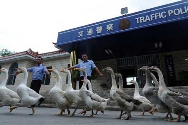 Những điều kỳ dị có một không hai chỉ có tại Trung Quốc - Ảnh 3.