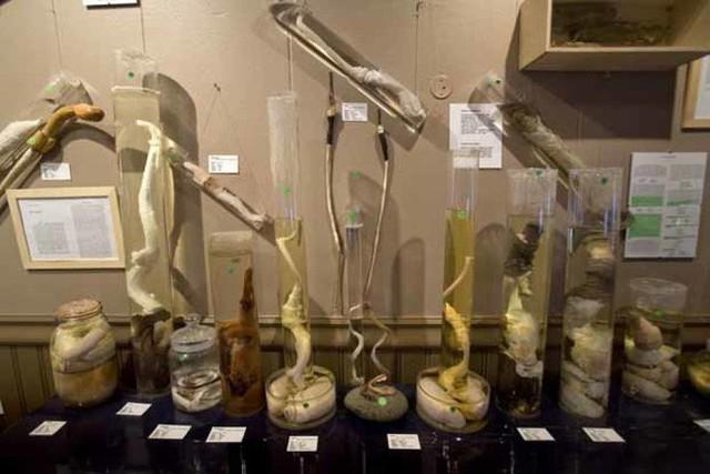 10 viện bảo tàng kỳ dị trên thế giới, tất cả chúng đều sẽ làm bạn ngỡ ngàng - Ảnh 6.