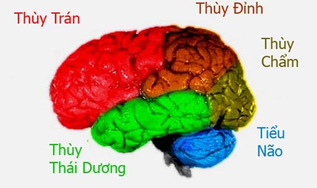 Bộ não của các thiên tài hoạt động như thế nào (Phần I)