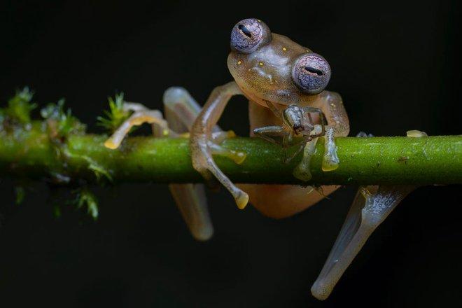 Bộ sưu tập ảnh thiên nhiên của năm: Hổ Sibera ôm cây, chú khỉ chill và con kiến bám lấy bọ cánh cam - Ảnh 12.