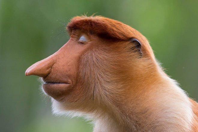 Bộ sưu tập ảnh thiên nhiên của năm: Hổ Sibera ôm cây, chú khỉ chill và con kiến bám lấy bọ cánh cam - Ảnh 13.