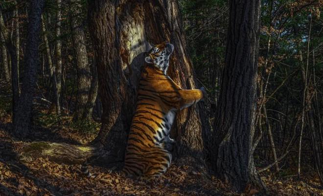 Bộ sưu tập ảnh thiên nhiên của năm: Hổ Sibera ôm cây, chú khỉ chill và con kiến bám lấy bọ cánh cam - Ảnh 1.