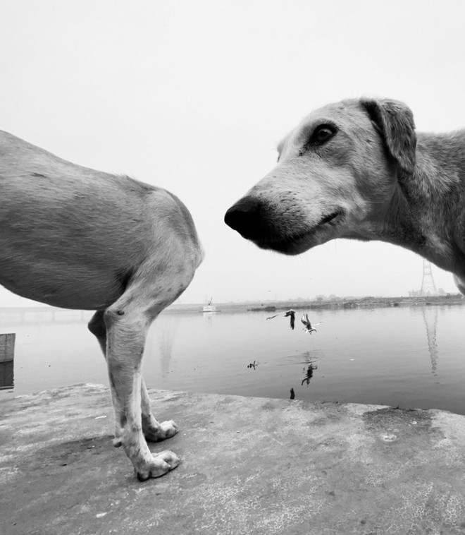 Cười nghiêng ngả với 14 bức hình thắng Giải nhiếp ảnh động vật hài năm 2020 - Ảnh 5.