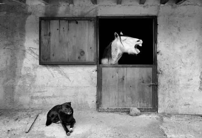 Cười nghiêng ngả với 14 bức hình thắng Giải nhiếp ảnh động vật hài năm 2020 - Ảnh 9.