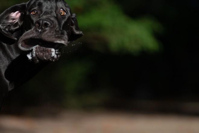 Cười nghiêng ngả với 14 bức hình thắng Giải nhiếp ảnh động vật hài năm 2020 - Ảnh 11.