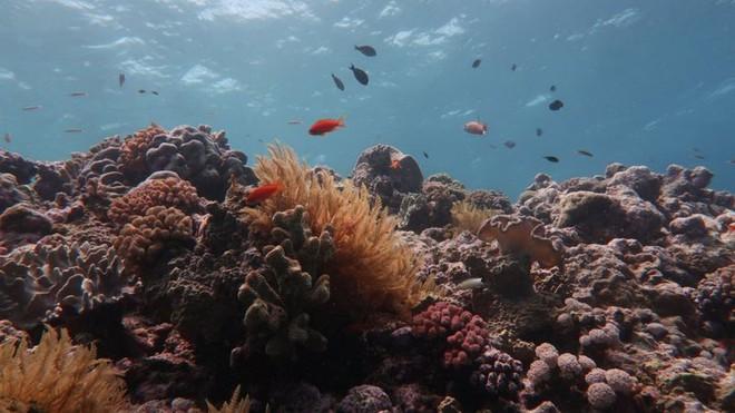 Rạn san hô 500 nghìn năm tuổi Great Barrier đã mất gần một nửa số san hô so với những năm 1990 - Ảnh 3.