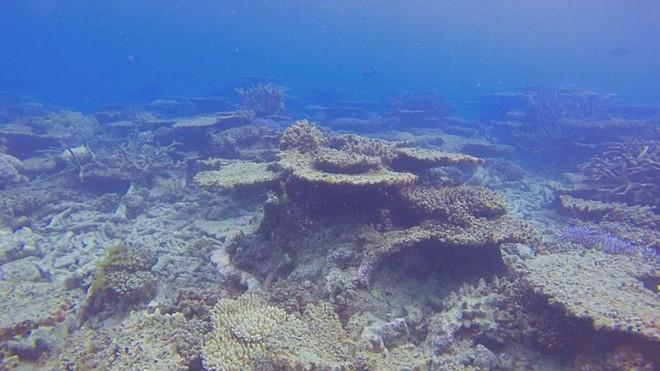 Rạn san hô 500 nghìn năm tuổi Great Barrier đã mất gần một nửa số san hô so với những năm 1990 - Ảnh 2.