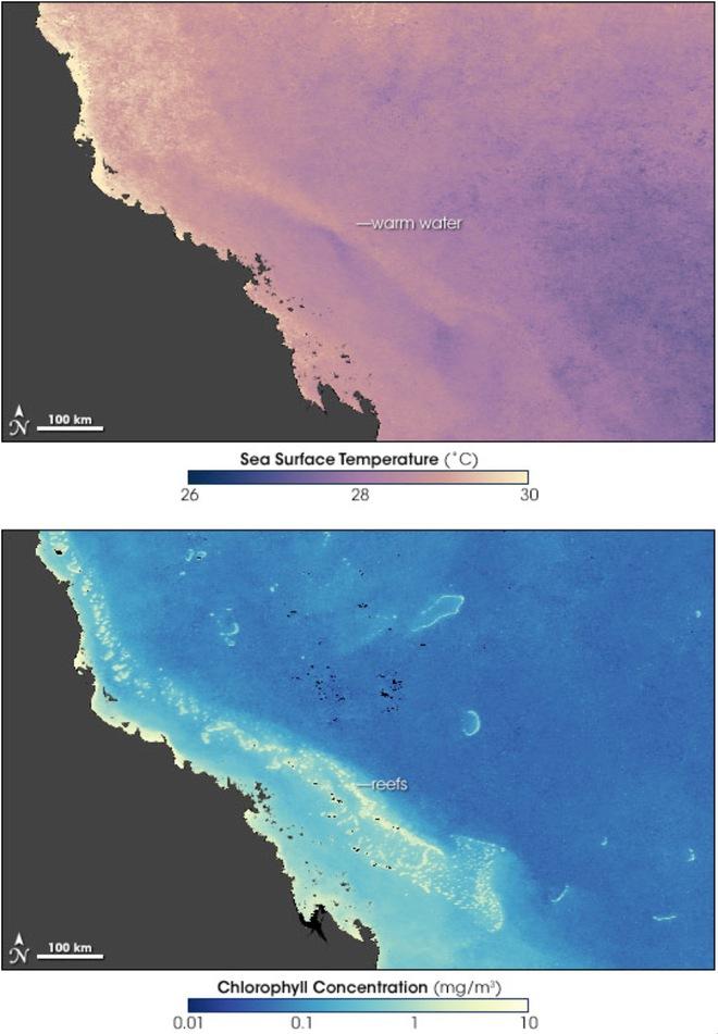 Rạn san hô 500 nghìn năm tuổi Great Barrier đã mất gần một nửa số san hô so với những năm 1990 - Ảnh 4.
